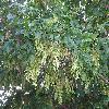AcerNegundo2.jpg 1024 x 768 px 240.74 kB