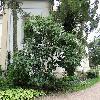 AcerPalmatum2.jpg 1223 x 917 px 390.28 kB