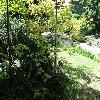 AcerPalmatumAconitifolium.jpg 1024 x 768 px 304.77 kB