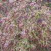 AcerPalmatumOrnatum.jpg 1024 x 768 px 248.27 kB