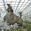 AdansoniaGregorii2.jpg 627 x 944 px 325.65 kB