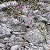 Allium.jpg 576 x 768 px 170.22 kB