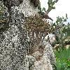 Aloe10.jpg 1110 x 833 px 300.34 kB