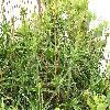 Aloe2.jpg 1024 x 768 px 248.59 kB