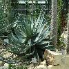 AloeAculeata.jpg 1024 x 768 px 260.53 kB