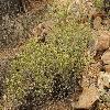 AmbrosiaDeltoidea.jpg 1200 x 900 px 562.76 kB