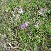Anemone2.jpg 1086 x 815 px 342.97 kB