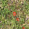Anemone3.jpg 1095 x 821 px 329.13 kB