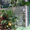 AnthuriumAmnicola2.jpg 720 x 960 px 342.43 kB