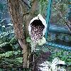 Aristolochia2.jpg 615 x 820 px 132.95 kB