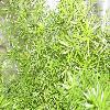 Asparagus2.jpg 1120 x 840 px 219.33 kB