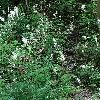 AstilbeArendsii3.jpg 1167 x 875 px 426.73 kB