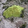 Azorella.jpg 1127 x 845 px 290.47 kB