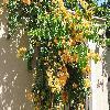 Bougainvillea4.jpg 1136 x 852 px 282.4 kB
