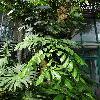 BrowneaAriza3.jpg 720 x 960 px 433.42 kB