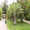 Butia9.jpg 1110 x 833 px 280.64 kB