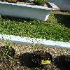 CalamagrostisArundinacea.jpg 681 x 908 px 233.56 kB