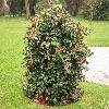 Camellia18.jpg 1120 x 840 px 243.73 kB
