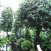 Camellia7.jpg 1024 x 768 px 249.81 kB