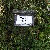 CaraganaArborescensPendula2.jpg 1024 x 768 px 215.36 kB