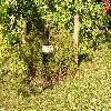 CaraganaArborescensWalker.jpg 1024 x 768 px 316.07 kB