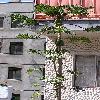 CaricaPapaya11.jpg 722 x 963 px 377.26 kB