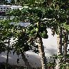 CaricaPapaya13.jpg 722 x 963 px 429.1 kB