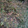 CarpinusCaroliniana.jpg 1024 x 768 px 312.16 kB