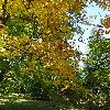 CaryaCordiformis3.jpg 681 x 908 px 285.02 kB