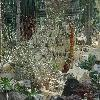 CerariaNamaquensis2.jpg 1024 x 768 px 277.95 kB