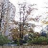 CercidiphyllumJaponicum5.jpg 642 x 856 px 239.09 kB