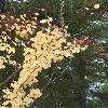 CercisSiliquastrum2.jpg 681 x 908 px 335.62 kB