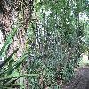 Cereus2.jpg 1136 x 852 px 362.43 kB