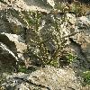 Cereus3.jpg 630 x 840 px 170.17 kB