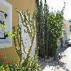 Cereus.jpg 1136 x 852 px 236.08 kB