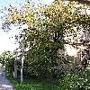Crataegus4.jpg 576 x 768 px 182.6 kB