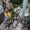 CrocusChrysanthus.jpg 1024 x 768 px 203.68 kB