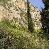 Cupressus6.jpg 1024 x 768 px 271.48 kB