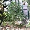 CupressusDupreziana3.jpg 576 x 768 px 171.41 kB