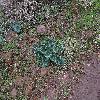 Cyclamen5.jpg 1086 x 815 px 340.42 kB
