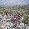 CylindropuntiaAcanthocarpa.jpg 1201 x 804 px 364.05 kB