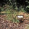 CytisusMultiflorus.jpg 576 x 768 px 213.6 kB