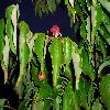 DendrobenthamiaJaponica4.jpg 1229 x 922 px 444.01 kB