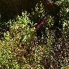 DracunculusVulgaris.jpg 1127 x 846 px 352.97 kB
