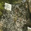 DroseraBinataDichotoma.jpg 1110 x 833 px 289.79 kB