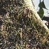 DroseraBinata.jpg 1200 x 900 px 365.51 kB
