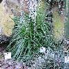 DyckiaFrigida.jpg 1024 x 768 px 258.94 kB