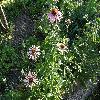 Echinacea2.jpg 1110 x 833 px 298.05 kB