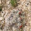 EchinocactusPolycephalus3.jpg 1000 x 750 px 343.75 kB
