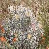 EchinocactusPolycephalus4.jpg 1000 x 750 px 359.75 kB
